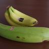 戦争にまきこまれたバナナ