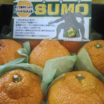 コラム「日本生まれ、カリフォルニア育ちデコポン」のサムネイル画像