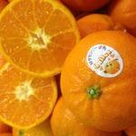 コラム「マーコットの味が濃いっ!」のサムネイル画像