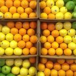 コラム「鮮やかなシトラス売場」のサムネイル画像