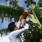 コラム「バナナ屋が育てるバナナ」のサムネイル画像