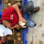 コラム「ココナッツが簡単に飲めるよ!」のサムネイル画像