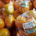 マツコーチャンネル「春を告げる「ミネオラ」が美味!」のサムネイル画像