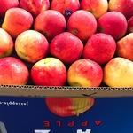 コラム「NZリンゴが断然おいしい!」のサムネイル画像