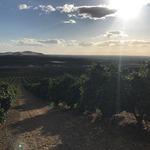 コラム「カリフォルニアのオレンジ産地」のサムネイル画像