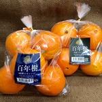 コラム「奇跡のオレンジ『百年樹』」のサムネイル画像