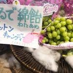 コラム「まるで綿飴!コットンキャンディー」のサムネイル画像