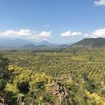 コラム「ビオ・アボカドの産地を訪れて」のサムネイル画像