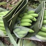 コラム「『王様のバナナ』の小宮さんを訪ねて」のサムネイル画像