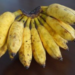コラム「アップルバナナを新発売!」のサムネイル画像