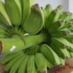 コラム「バナナの呼び名」のサムネイル画像