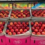 コラム「新鮮なリンゴがいっぱい!」のサムネイル画像