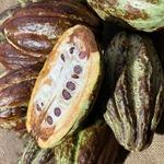 コラム「手作りチョコを、本物のカカオで!」のサムネイル画像